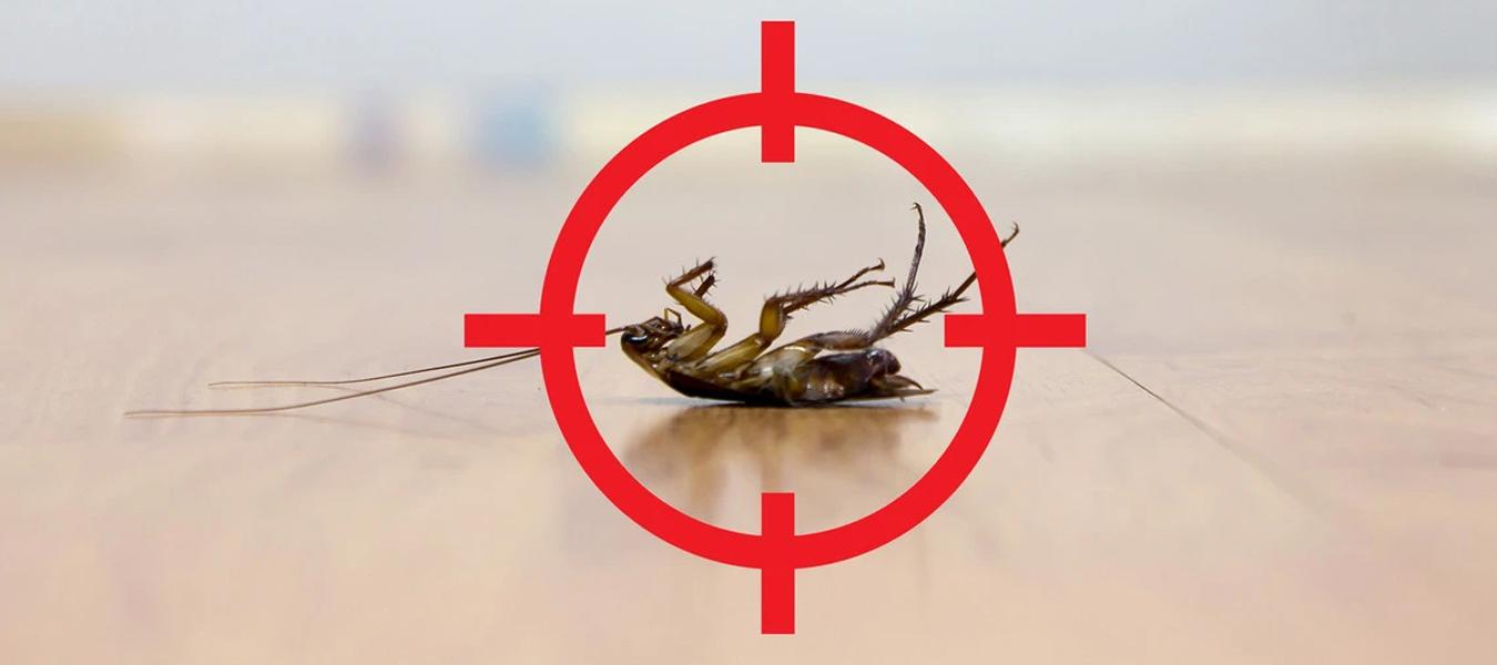 Ataşehir Haşere İlaçlama Firması İhtiyaçlarınızda WorldPest Böcek İlaçlama Hizmetinizde!